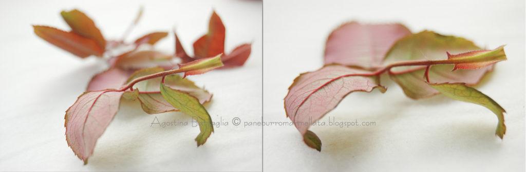 foglie br