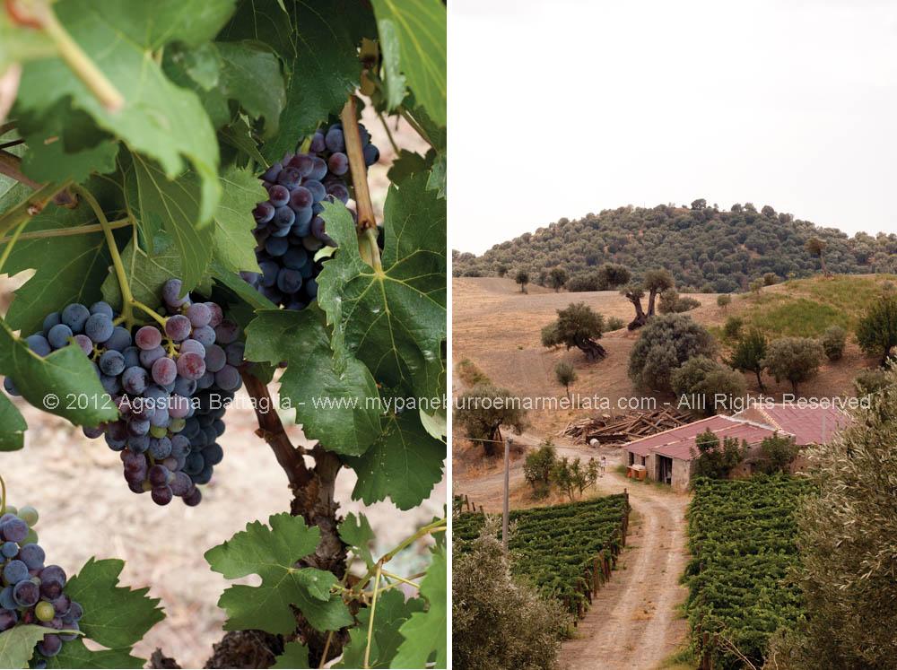 uva e cascina