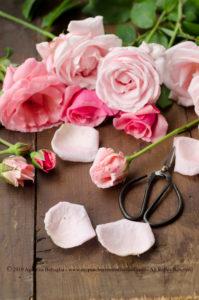 Acqua di rose fatta in casa ed il Giardino segreto